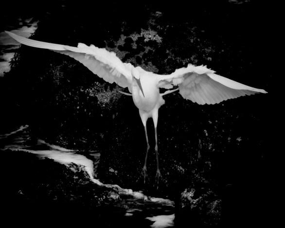 Landing © Bob Sadler 2012