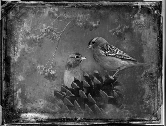 Chipping Sparrows by Dianne Yudelson