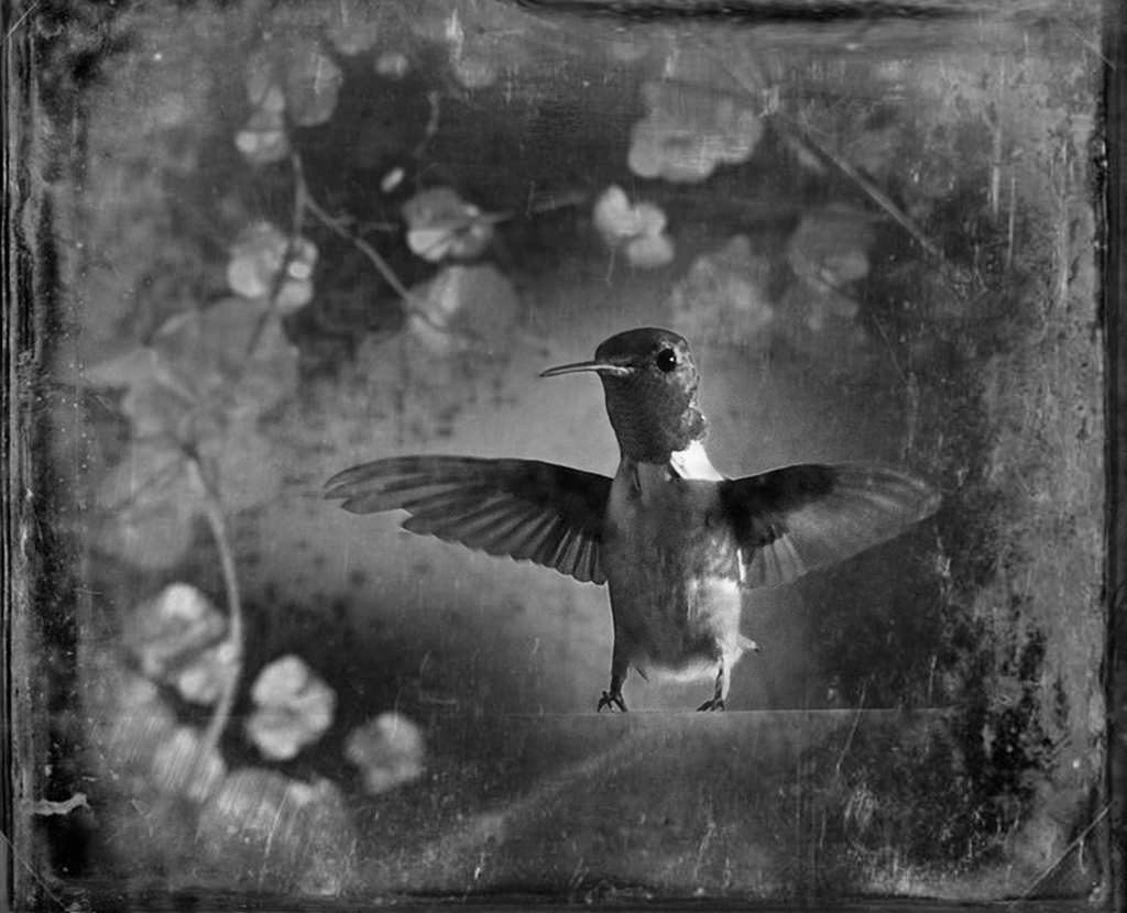 Ruby-Throated Hummingbird © Dianne Yudelson