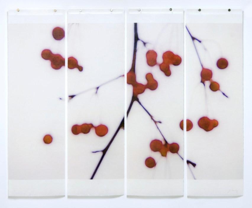 Winter Berries © Jeri Eisenberg
