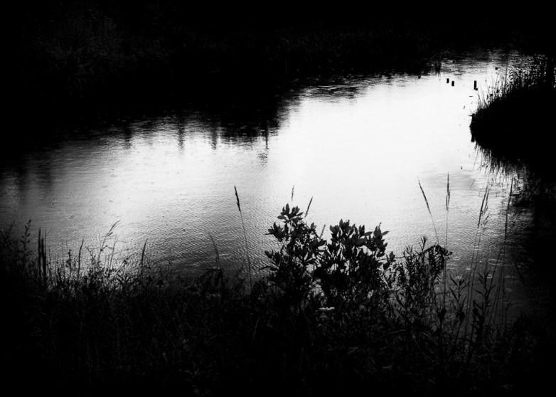 The Pond Project 101 E.E. McCollum