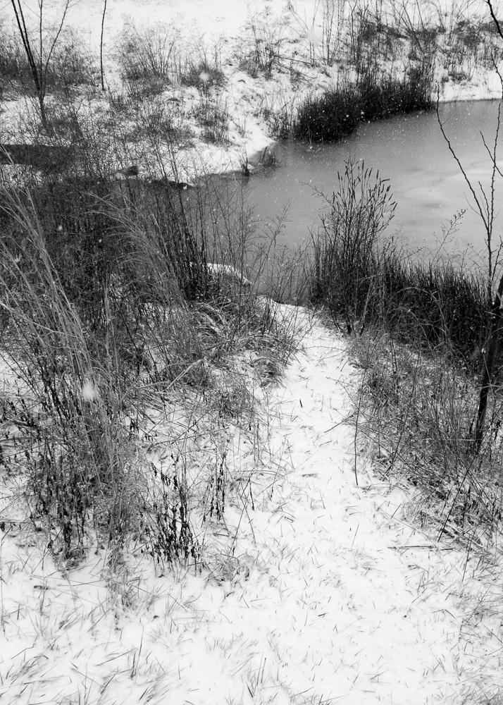 The Pond Project 29 ©E.E. McCollum