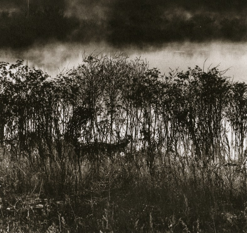 Grasses and Fog © Ryuijie