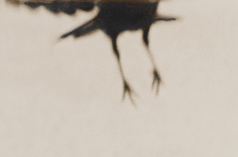 Crow 13 © Jane Olin