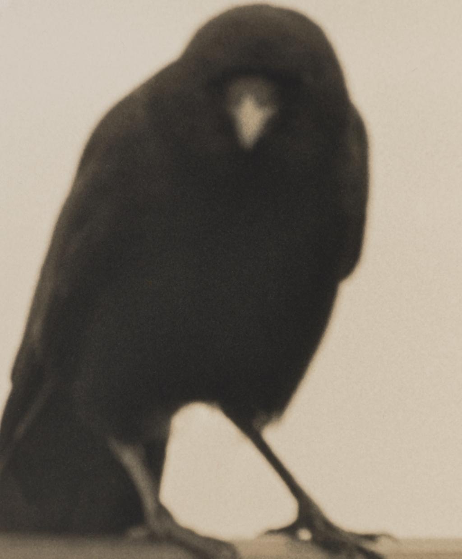Crow 2 © Jane Olin