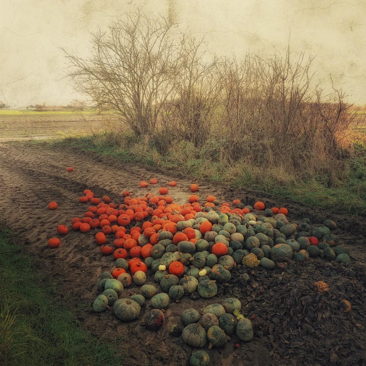 Orange and Green © Bernd Webler
