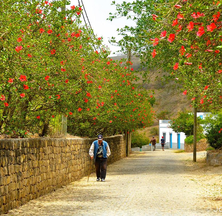 Flowers on the island of Brava. Credit : Joli Moniz