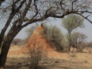 A Namibian termite hill.