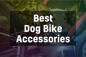 Best Bike Accessories for Dogs