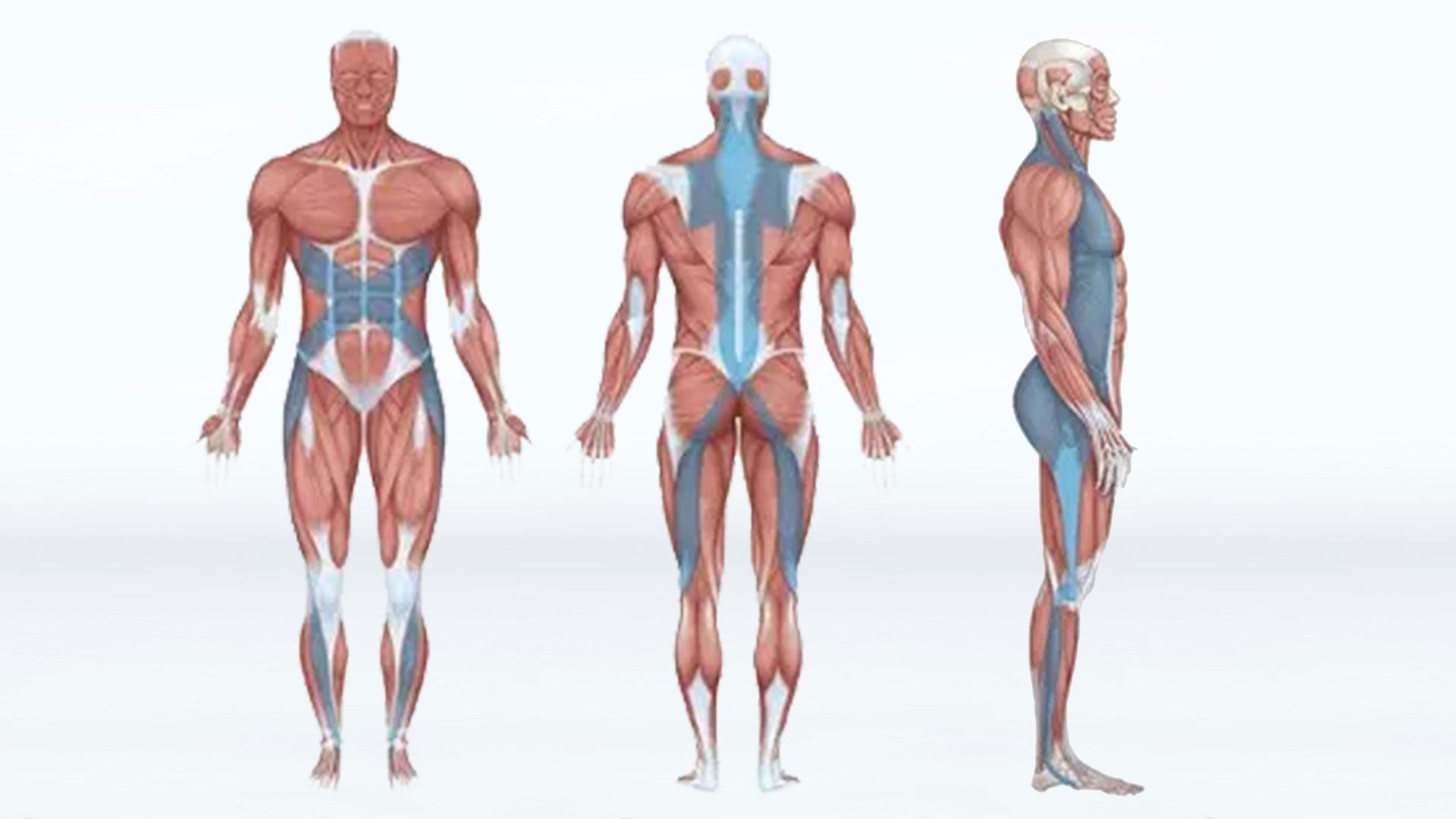 fascia movement assessment
