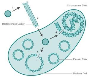 A diagram explaining how Crispr works.