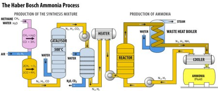 A diagram explaining the Haber-Bosch ammonia production process.
