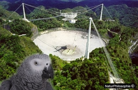 An aerial photograph showing the Arecibo Observatory telescope, with a picture of Alex at the forefront. The dish reflector of the telescope is built into a valley in the landscape, and the feed antenna is suspended by cables above it. Since the reflector can't be moved, the telescope is steered to point at different regions of the sky by moving the feed antenna $ ($in bell shaped dome$ )$ along on a curving track. The dome shields the feed antenna from interfering radio signals. Collage: NaturPhilosophie
