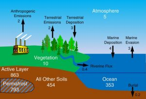 A diagram showing the levels of soil carbon and mercury in permafrost regions in numbers.