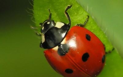 Bug Hunters!