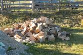 Another golden heap of beech and birch logs delivered from up the hill by Viorel and Chivu