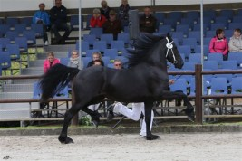 Geartsje fan de Noeste Hoeve derde plaats twenterkampioenschap op de Centrale keuring 2012 eigenaar Familie Age Okkema te Siegerswoude.