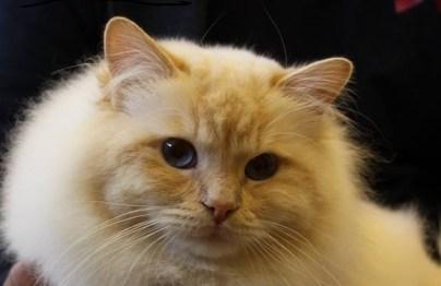 Elmer profil