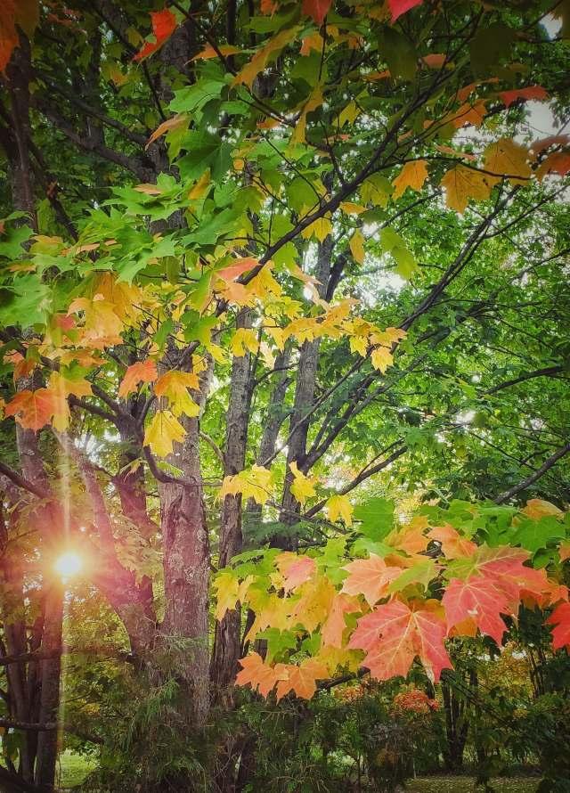 automne-canada