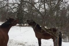 Ett hästnördigt inlägg