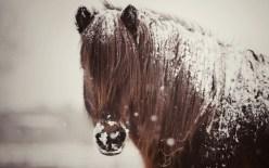 Capa de Nieve en caballos