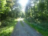 Echt coole Laubwälder