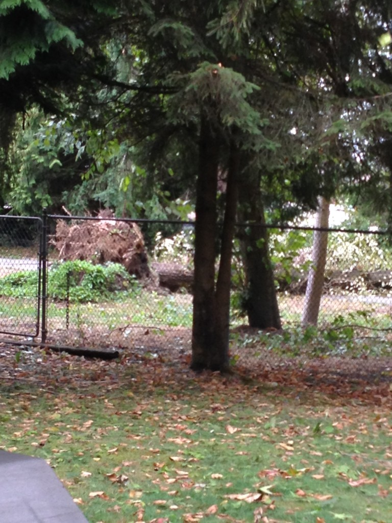 tree behind house