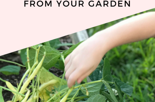 How to Freeze Green Beans from the Garden from StampinFool.com