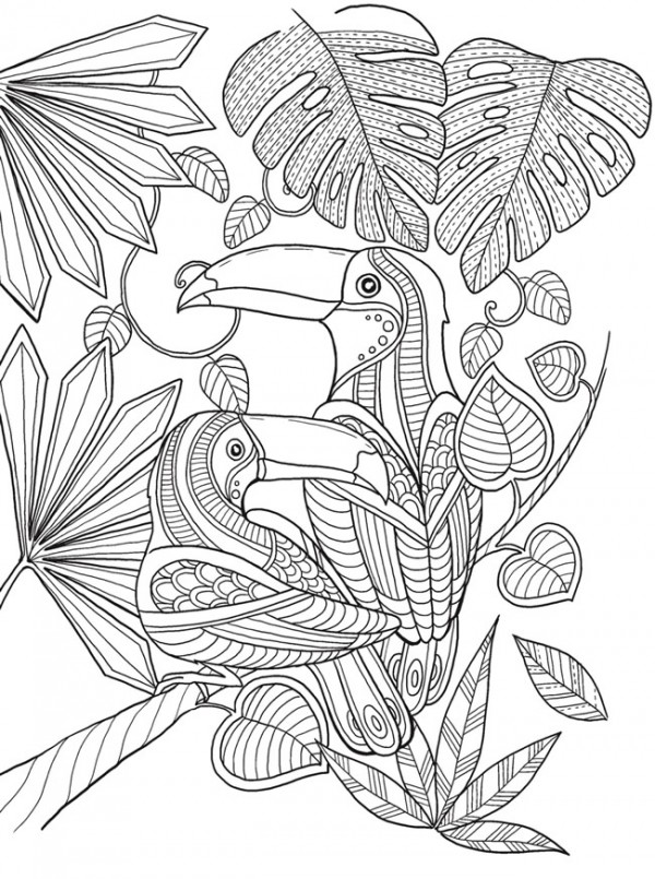 Toucan Coloring Page For Adults || COLORING-PAGES-PRINTABLE.COM | 805x600