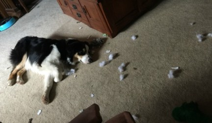 finn-and-toy-stuffing