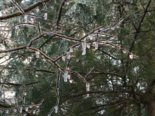 icy-tree-limb