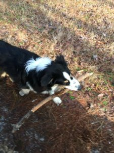 finn-with-a-too-big-stick