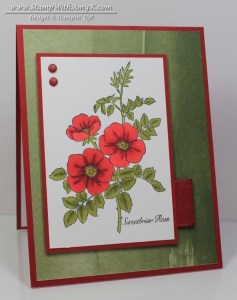 Sweetbriar Rose 1 - Stamp With Amy K