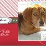 Holiday Photo Cards – Pets