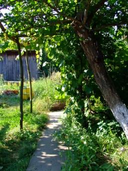 Spre grădină