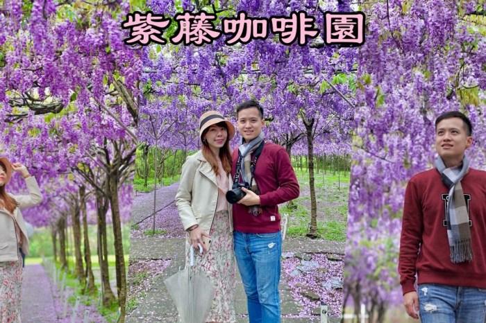 紫藤咖啡園 |水源園區二店|全台最大最美的紫藤花園 (票價、花況)