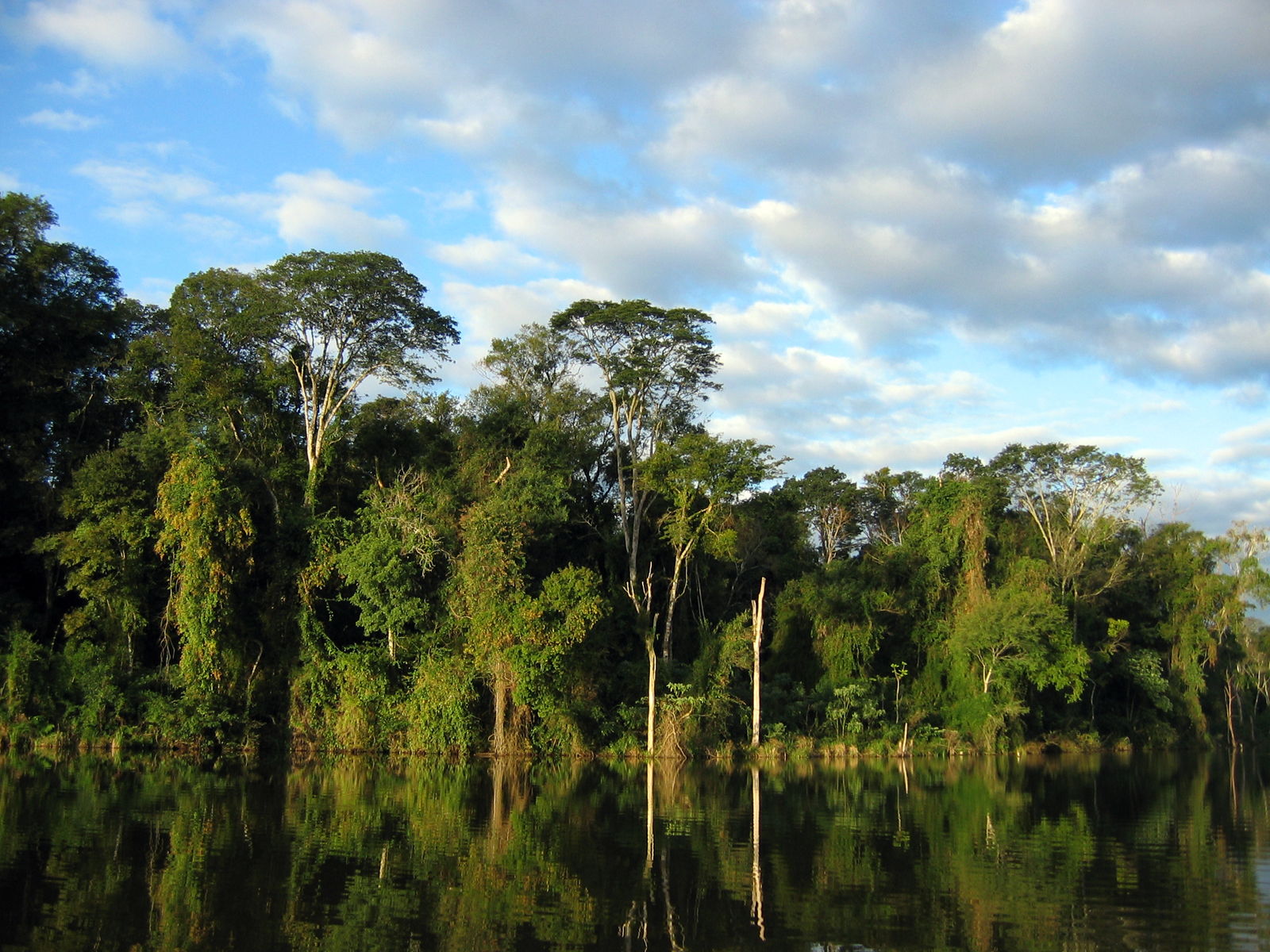 After 500 years of exploitation and destruction, the brazilian atlantic forest has been reduced to less the 8% of its original cover, and climate change may. Conservation And Sustainable Use Of The Atlantic Forest Paraguay Whitley Award