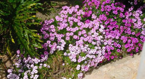 Miriam's flowers