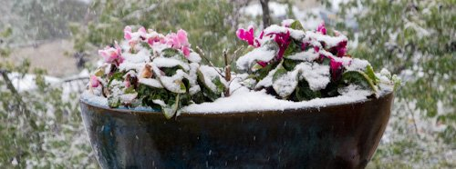 Hardy flowers.