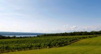 Photo of green field and vineyards with lake in background