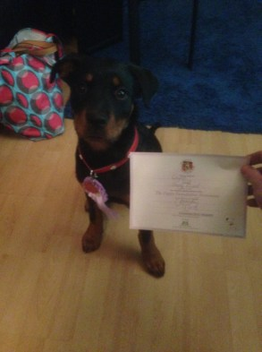 Layla with her GCDS Puppy Award