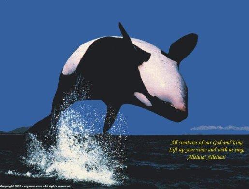 whale praising