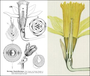 Reading the Collections, Week 5: Types Of Floral Mechanism