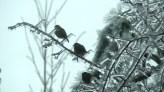 Birds at St. Andrew's
