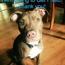 We support and encourage spay/neuter and so should you!