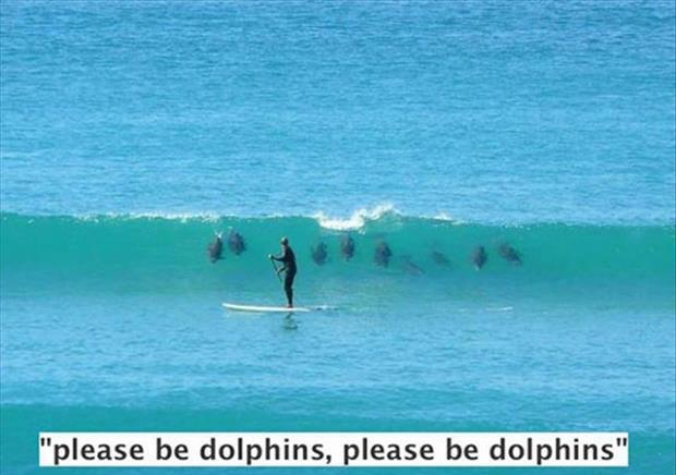 I hope those are dolphins