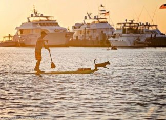 Stand up paddling dog