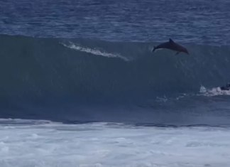 Team O'Neill Rider Jed Gradisen Surprise Dolphin Nose Through Surf Board