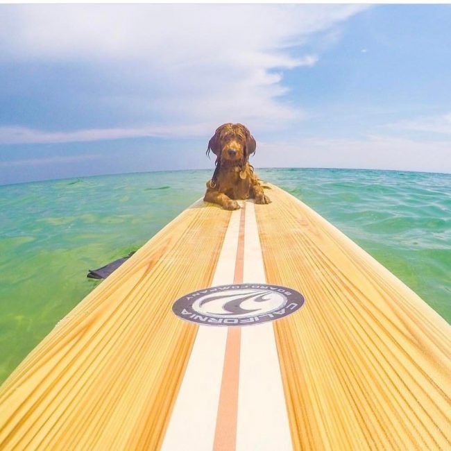 Keeper Sports California Board Co. sup pup