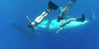 Beautiful Underwater Ballet: 3 Sirens and 3 Humpback Whales